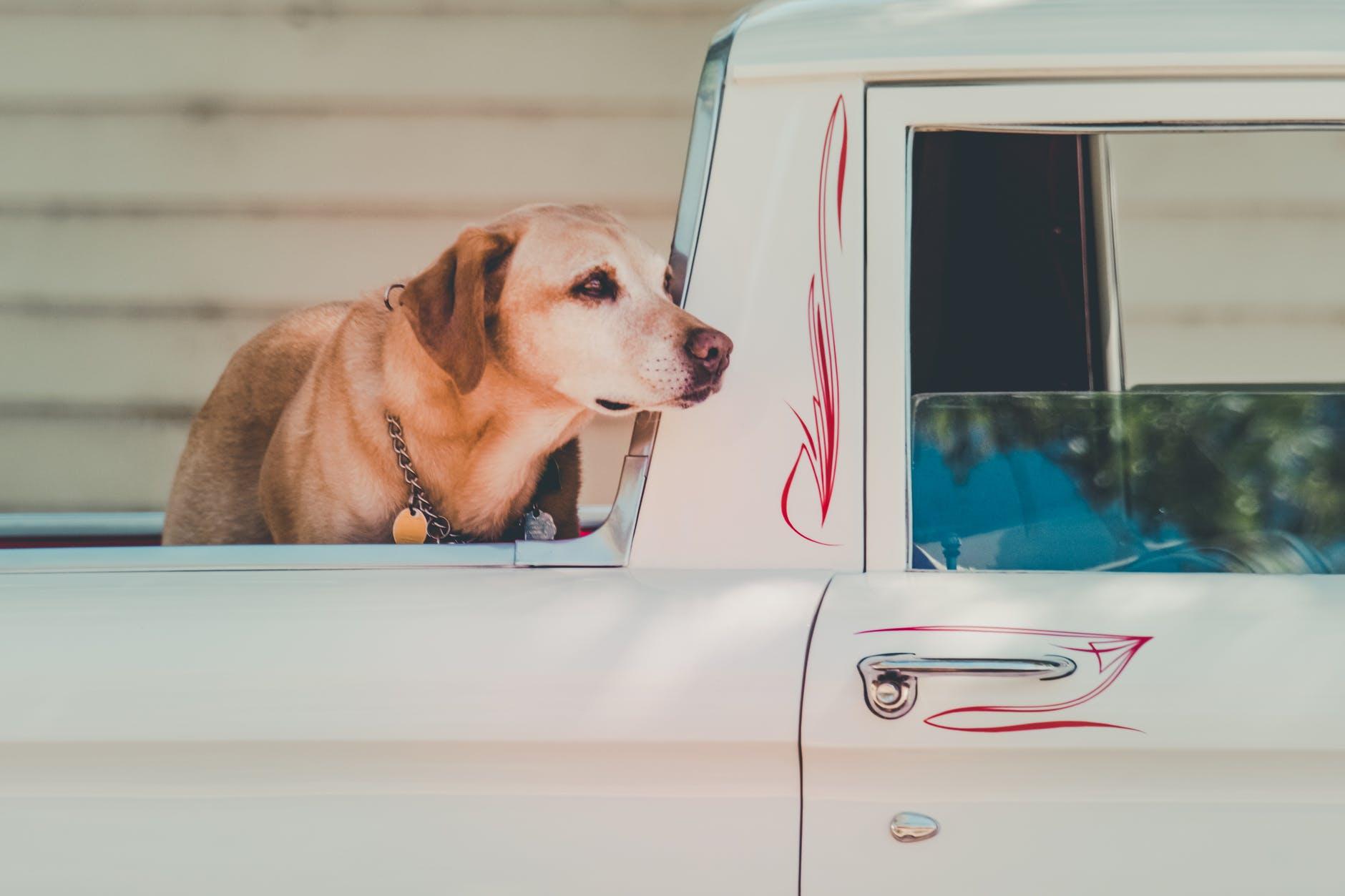 Mascota en el coche -Documentos necesarios para viajar con mascota