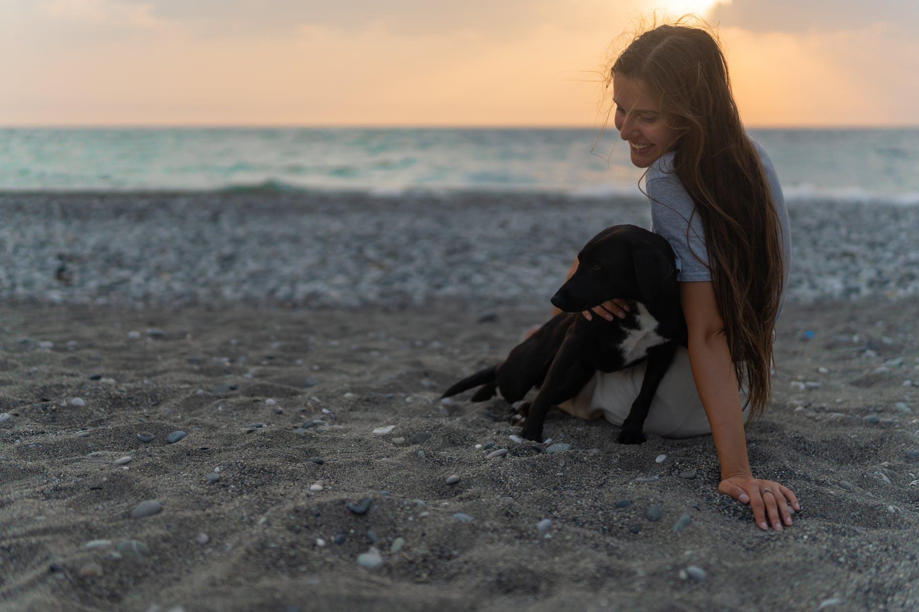 Mascota en la playa -Documentos necesarios para viajar con mascota